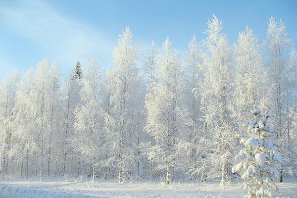 Winter Fall